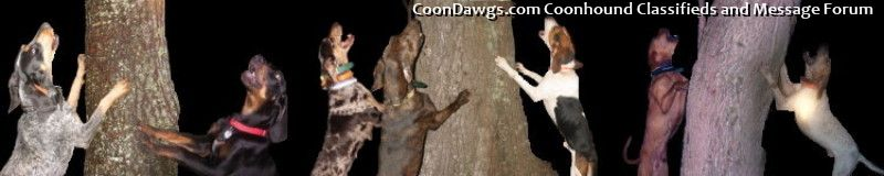 CoonDawgs.com: Your One Stop Coon Dog Source for Coon Hunting